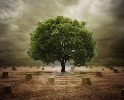 已過度砍伐樹木的圖片搜尋結果