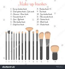 makeup brushes set names. make-up brushes set. isolated vector illustration of with names makeup set /