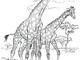 Giraffe Coloring Pages Giraffe Color Page Realistic Giraffe Coloring