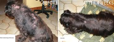 Dermacton Cream Natural Relief for Itchy Dogs