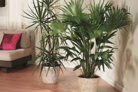 indoor lighting for house plants. 3. consider artificial lighting indoor for house plants