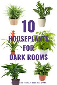 10 best house plants for dark rooms