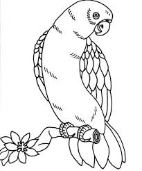 Small Picture Lovely Parrot Coloring Page 74 On Coloring Print with Parrot