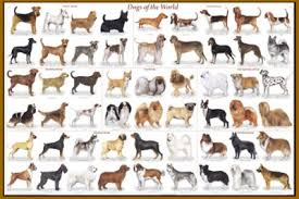 types of dogs breeds with names