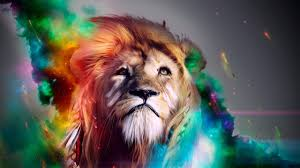 hd photos collection of lion hd 6222006 by tawny kirsch