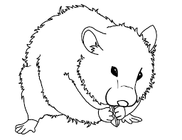 Coloring Pages Of Hamsters Hamster Roborovski Hamster Information