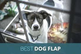 windproof dog door flap automatic microchip electronic weatherproof pet best plexidor weatherproof dog doors