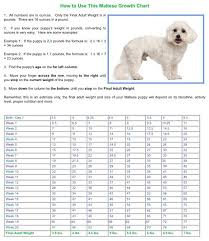 Leonberger Puppy Growth Chart 60 Rational Maltese Puppy Weight Chart