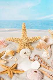 sea shells collection small sea shells collection with beach and sea stock photo picture