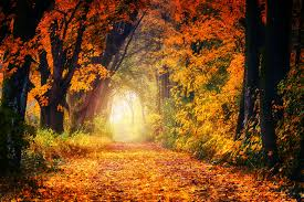 Image result for images of clear path in nature