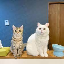 ポム さん と シマ ちゃん