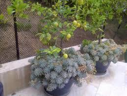 The 25 Best Orchards Ideas On Pinterest  Fruit Tree Garden Underplanting Fruit Trees