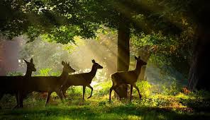 Image result for WILDLIFE PHOTOGRAPHY PICS