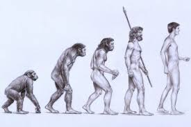 Evolution Of Man Chart Evolution Is A Distraction Adaptation Is Our Reality