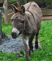 Milf takes sicilian donkey