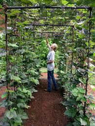 bean tunnel diy vegetable garden 6 gardenista