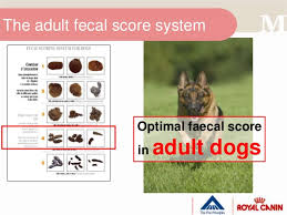 Fecal Scoring Chart Canine Fecal Score