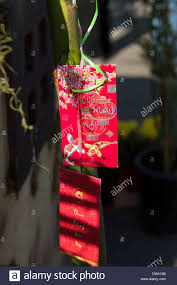 vietnamese happy new year gift envelopes hanging on lucky bamboo red envelopes or packets are used to give monetary gifts