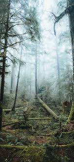 Best Forest iPhone 11 HD Wallpapers ...