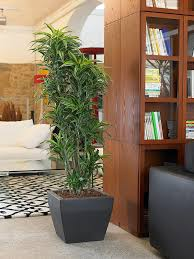 office plant displays. Office Plants Interior Plant Displays (2)