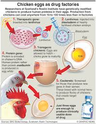 Infographic Chicken Eggs As Drug Factories Dhaka Tribune