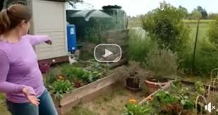 diy drip irrigation system irrigate from rain barrels by gravity feed
