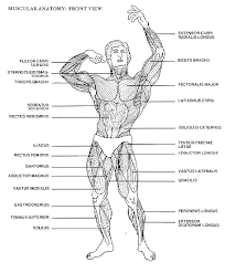 Bodybuilding Body Measurement Chart Pin On Projects To Try