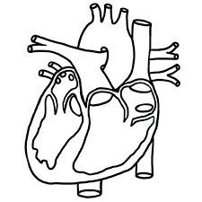Human Heart Coloring Pages Small Heart Coloring Pages Large Heart