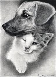 Картинки по запросу нарисовані кіт та собака