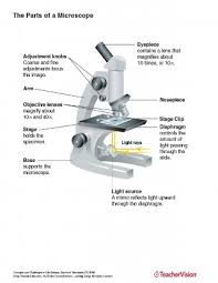 Parts Of The Microscope The Parts Of A Microscope Labeled Printable Teachervision