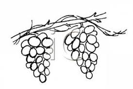 grapes clipart black and white. a black and white cartoon of grapes hanging from vine - royalty free clipart picture