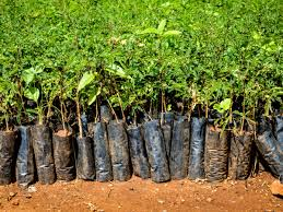 Ethiopia Plants Over 200 Million Trees In 1 Day Engoo Daily News