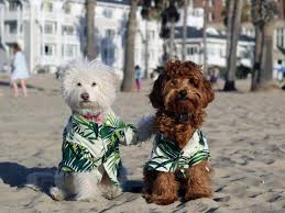 Best <b>Dog Clothes for Spring</b> & Summer | HGTV
