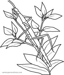 Camouflage Coloring Pages Printable Coloring Pages Coloring Pages