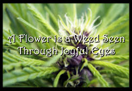 A Flower is a Weed Seen Through Joyful Eyes - Weed Memes via Relatably.com