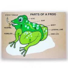 Parts Of A Frog Parts Of A Frog Puzzle From Tahanang Walang Hagdanan Shopinas