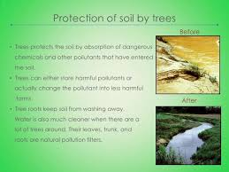essay on importance of trees of words official website  essay on importance of trees of 100 words