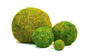 Decorative Moss Balls DECORATIVE MOSS BALLS Rentals Corvallis OR Where to Rent 43