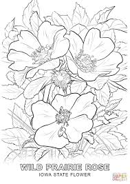 Small Picture Iowa State Flower coloring page Free Printable Coloring Pages
