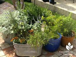 texas gardening blogs cute containers patio garden central gardener austin texas garden blogs