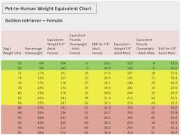 English Golden Retriever Weight Chart Logical Golden Weight Chart Compression Golf Ball Chart