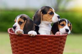 A Quick Guide To Puppy Socialization