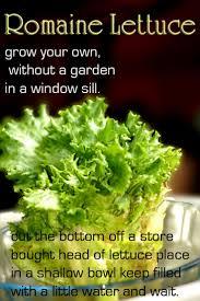 Kitchen Scrap Gardening 17 Best Images About Gardening From Kitchen Scraps On Pinterest