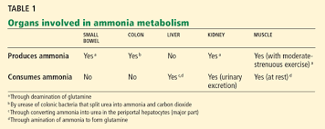 What Is The Utility Of Measuring The Serum Ammonia Level In