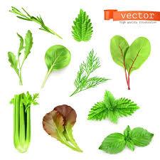 Vegetable Leaf Barca Fontanacountryinn Com