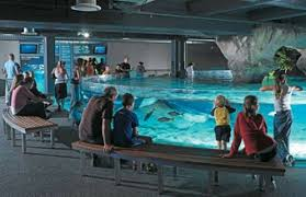 Image result for Kelly Tarlton's Aquarium