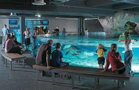 Image result for Kelly Tarlton's Aquarium