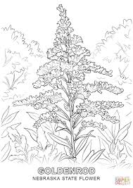Small Picture Nebraska State Flower coloring page Free Printable Coloring Pages