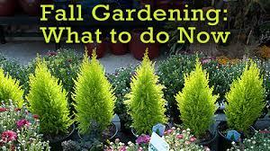 Fall Gardening What To Do Now U2013 CaryCitizenFall Gardening