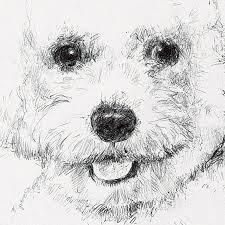 Ritratti Di Animali Riccardo Martinelli Fine Art